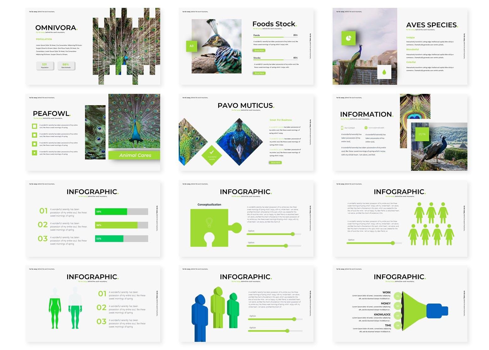 教育课件孔雀主题Powerpoint模板合集 Peacoks – Powerpoint Template设计素材模板